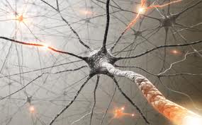 843073c6a How do I know if I have Pudendal Neuralgia or Pudendal Nerve Entrapment