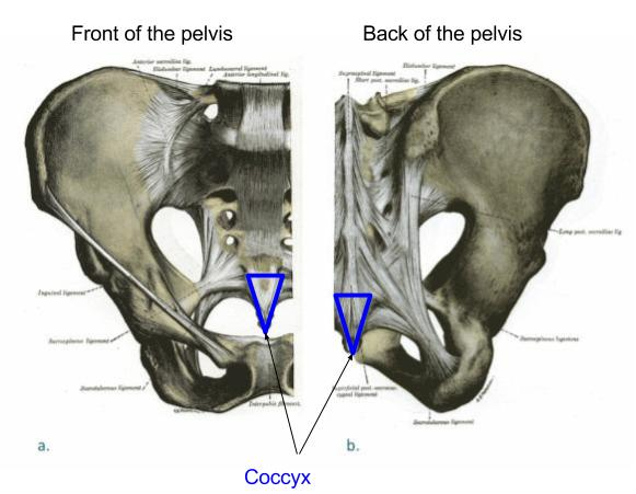 coccyx-front-and-back